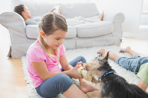 Pet Friendly Carpet and Rug Cleaning