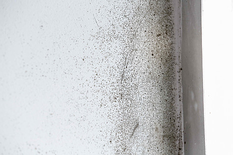 Dealing With Drywall Mold